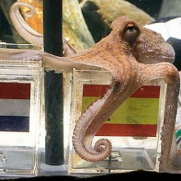 Thus spake Paul the Octopus