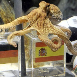 Germany to Octopus: Say it isn't so!